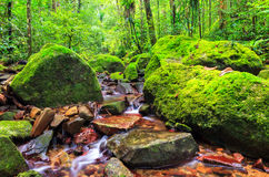 Rainforest stream Royalty Free Stock Image