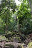 Rainforest stream bed with mossy rock stock image