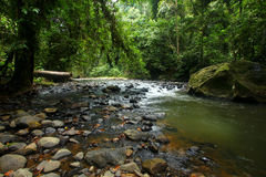 Rainforest stream / creek Royalty Free Stock Photos