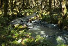 Rainforest stream Royalty Free Stock Photo