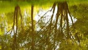 Rainforest with stream flowing through it. Reflection of trees and sky in water. Raindrops drip into the river circles. On the water stock footage