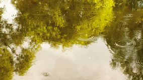 Rainforest with stream flowing through it. Reflection of trees and sky in water. Raindrops drip into the river circles. On the water stock video footage