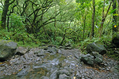 Rainforest with stream, Maui, Hawaii Stock Photos