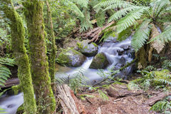 Rainforest stream with plants in a national park Stock Image