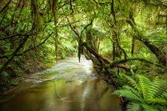 Rainforest stream Royalty Free Stock Photos