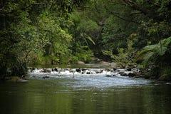 Rainforest Stream. Small rocky bar in hidden rainforest stream, Springvale, North Queensland Stock Photo