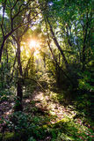 Rainforest with sunbeam at Doi Pha Hom Pok National Park in Chiang Mai, Thailand.  Stock Photo