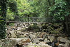 Rainforest Suspension Bridge Royalty Free Stock Photos