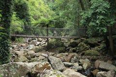 Rainforest Suspension Bridge Royalty Free Stock Photos
