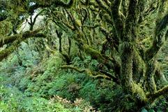 Rainforest in Taranaki, North Island, New Zealand Royalty Free Stock Image