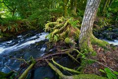 Rainforest Theme Royalty Free Stock Photography