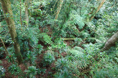 Rainforest Top Down Royalty Free Stock Image