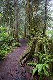 Rainforest Trail Stock Photography