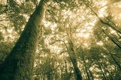 Rainforest travel Stock Photo