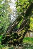 Rainforest tree Stock Image