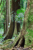 Rainforest Tree Trunk Stock Photos