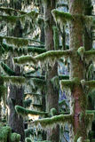 Rainforest trees Stock Photos
