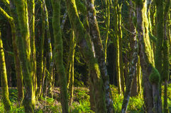 Rainforest Trees Background Stock Image