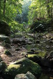 Rainforest. Trees, rocks and stream Stock Image