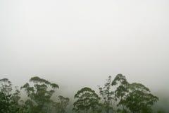 Rainforest treetops against white fog Stock Photos