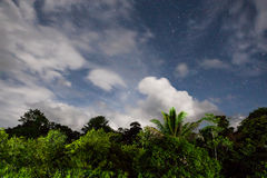 Rainforest treetops and starry sky Stock Image