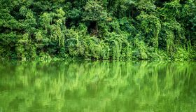 Rainforest or Tropical jungle with river and water background. In Trat province, Thailand stock photo