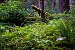 Rainforest Stock Photos