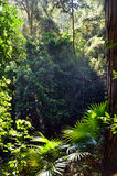 Rainforest understory of ferns, palms and vines. Light filtering through into the rainforest understory of ferns, palms and vines, Royal National Park, Sydney Royalty Free Stock Photos