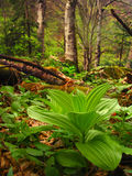 Rainforest vegetation. Forest vegetation in a nice spring day Royalty Free Stock Image