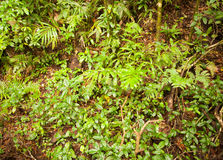 Rainforest vegetation Royalty Free Stock Photos