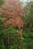 Rainforest view Stock Photo