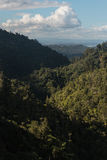 Rainforest at Waitakere Ranges Royalty Free Stock Image