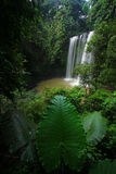 Rainforest waterfall Royalty Free Stock Photo