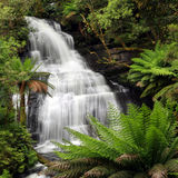 Rainforest Waterfall. Waterfall in lush ferny rainforest.  XXXL file.  Triplet Falls, Otway Ranges, Victoria, Australia Royalty Free Stock Photos