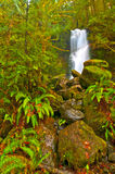 Rainforest Waterfall Stock Image