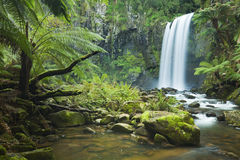 Rainforest waterfalls, Hopetoun Falls, Victoria, Australia. Waterfall in a lush rainforest. Photographed at the Hopetoun Falls in the Great Otway National Park stock image