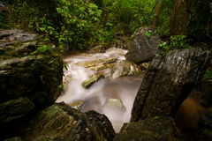 Rainforest. Watershed. Stream from the mountains. Natural water on the mountain, after rain. Watershed, the water naturally, rainforest Royalty Free Stock Photos