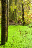 Rainforest wetland wildernis of West Coast BC Stock Photos