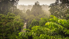 Rainforest wiew from the Canopy Walk Tower In Sepilok, Borneo. Canopy Walk In Sepilok, Sabah, the Malaysian part of Borneo. An early morning with fog. Rainforest Royalty Free Stock Image