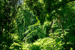 Rainforest1 Stock Image