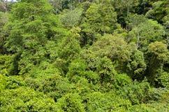 Rainforestdjungelbakgrund av den Borneo ön Fotografering för Bildbyråer