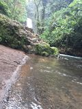 Rainforesten äventyrar i tropikerna Royaltyfri Fotografi