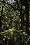 RainforestFiordland nationalpark Härliga Nya Zeeland Arkivbilder