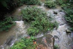 Rainforestflod Royaltyfria Foton