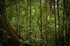 Rainforestnatur, Yasuni nationalpark, Ecuador Arkivfoto