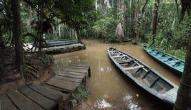 Rainforestporten på Sandoval sjön nära Puerto Maldonado, amason Peru Arkivfoto