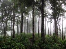 Rainforests Royaltyfria Foton