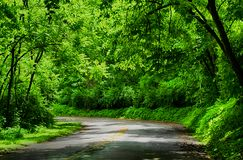 Rainforests are forests characterized by high rainfall. With annual rainfall in the case of tropical rainforests between 250 and 450 centimetres, and stock photography