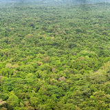 Rainforests. View from above. Sigiriya, Polonnaruwa, Sri Lanka Stock Images