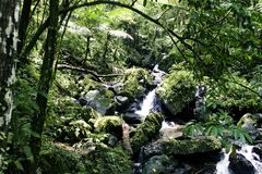 rainforestström Royaltyfri Bild